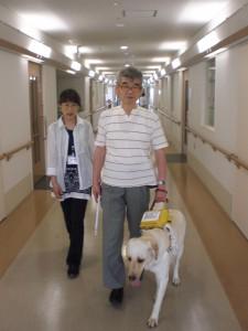 盲導犬歩行ユーザーとの歩行